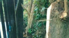 Grannarna anser att deras trädgård förfulats efter att 62-åringen sågat ned flera träd. Foto: Polisen