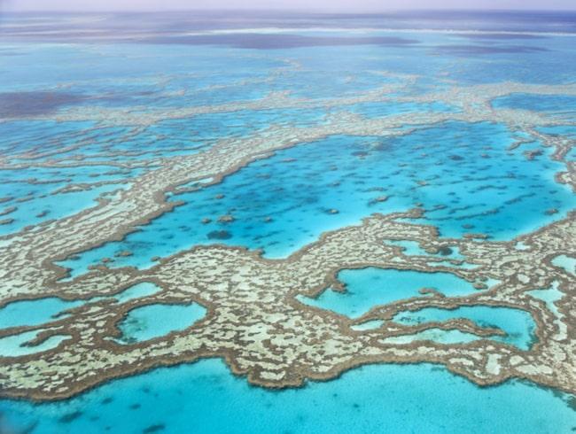 """Australien vill ändra hotläget för Stora Barriärrevet till """"Katastrofläge""""."""