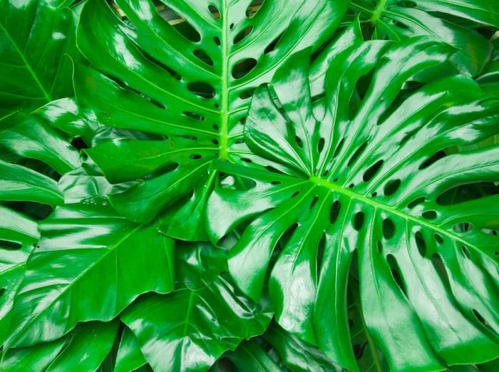 växter som inte behöver ljus