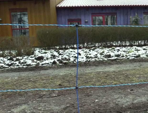"""Vildsvinen sprider skräck i skånska byn: """"Obehagligt"""""""