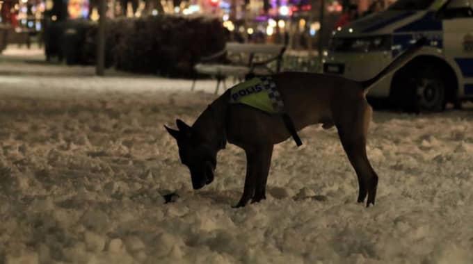 Bra drag i nosen. Hermans nos har de senaste åren varit avgörande för flera polisinsatser. Under 2014 och 2015 nosade polishunden upp cirka 20 kg amfetamin, 11 kg cannabis, 11 pistoler och tre automatvapen. Foto: Polisen