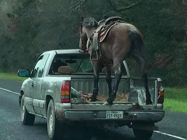 Bilderna och filmerna på hästtransporten har väckt stor uppmärksamhet i medier och bland djurvänner på sociala medier.