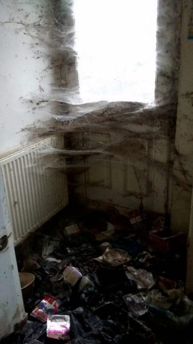 Misskötseln ledde till fängelse. Foto: RSPCA Cymru