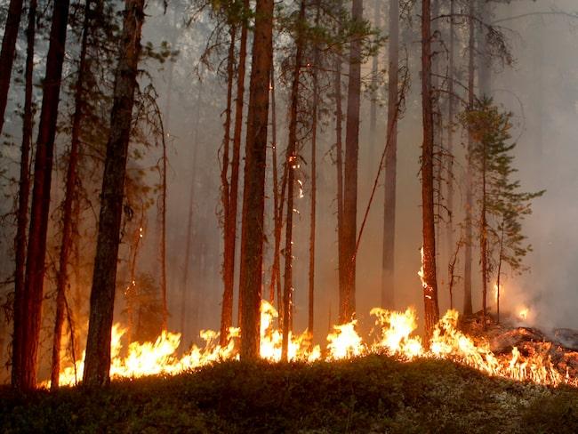 Skogsbranden som härjade utanför Ljusdal i juli.