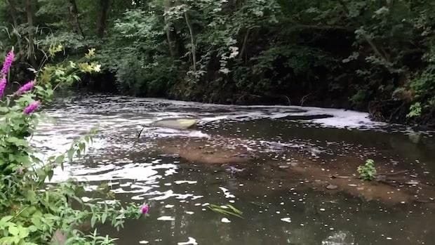 Mystiskt utsläpp från okänt rör dödar fisk