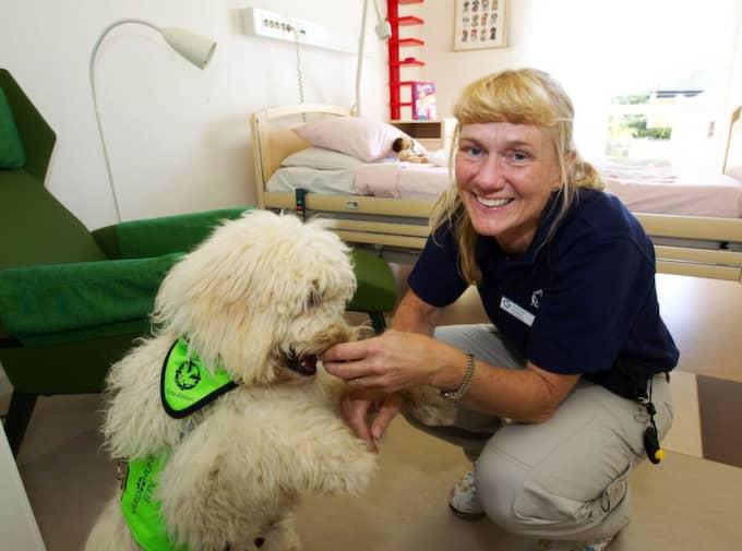 Vårdhunden Livia på Södra Älvsborgs sjukhus är en labradoodle. Här tillsammans med hennes matte, barnläkaren Ann Edner. Foto: Sven Lindwall
