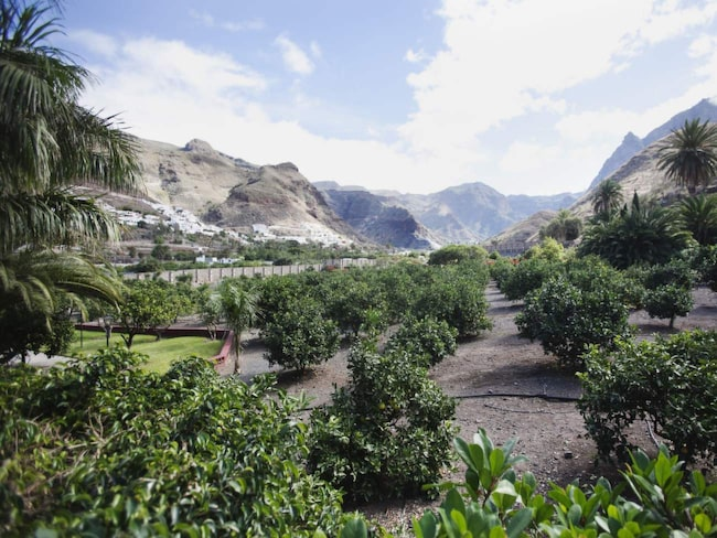 Avkoppling från bruset. När Las Palmas-borna ska koppla av åker de hit till bördiga Agaetedalen.