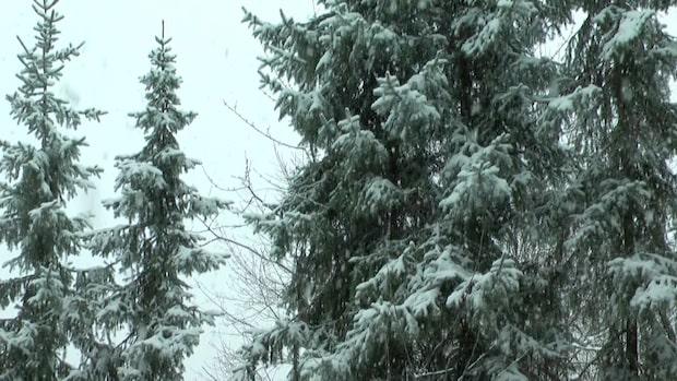 Trafikkaos efter snöfall – polisen varnar för extremhalka