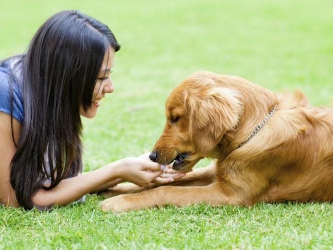 <span>Under semestern frossar vi gärna i grillat och andra godsaker. Men se upp med vad du ger din hund.</span>