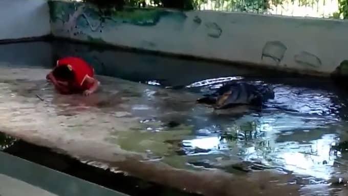 Efteråt glider krokodilen tillbaka ner i vattnet – och mannen ligger kvar. Foto: Youtube/ViralHog