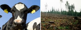 Ny studie: Ekologisk  mat är dålig för klimatet