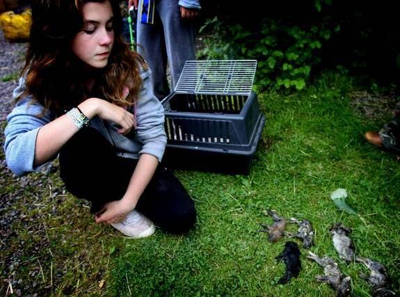 Stephanie Gullberg sörjer sina döda kaninungar. Foto: Sonny Thoresen