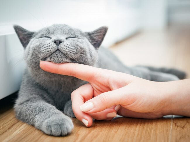 orolig katt symptom