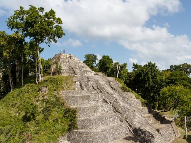 Mayaindianernas rike i Centralamerika kan vara fyra gånger större än man tidigare trott.
