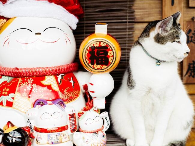 Söta katter överallt i Huotong.