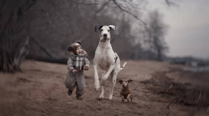 Ilya, 2, springer med den stora hunden Shane och en mindre hund. Foto: Solent News / TT