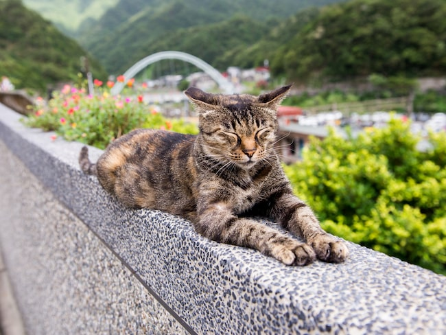 Nu huserar 200 katter i byn – fler än antalet människor.