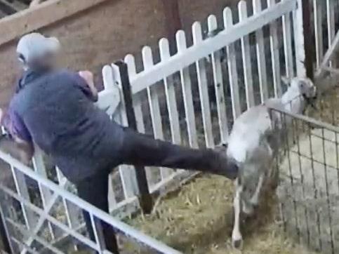 Ett filmklipp från renanläggningen i Kent, strax öster om London, visar hur en anställd sparkar ett djur i baken.