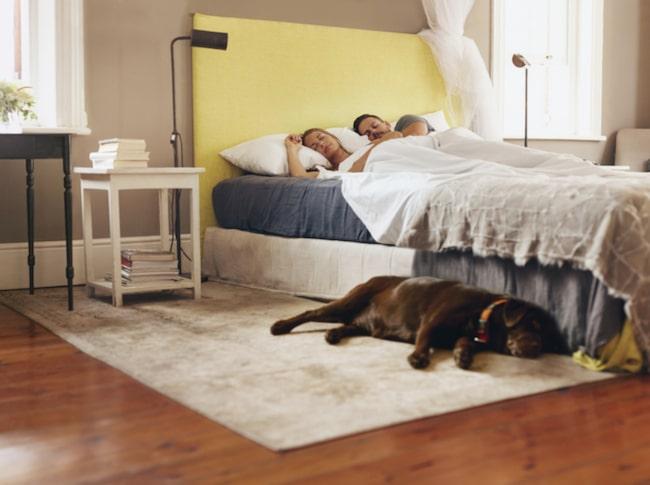 Matta i sovrummet? Då är det läge att städa regelbundet ifall du vill undvika en bakteriefest.