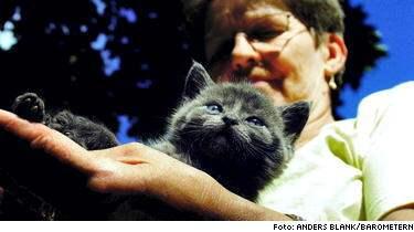 Katten Kämpe lämnades att dö, men får nu vila ut hos Marita Blomqvist Fernström som driver katthem. Det är ofattbart att någon kan göra så, säger hon.